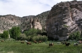 Conaway-Park-Cattle-P1010010_b2649fde758e48aff1b92d5f208731ca